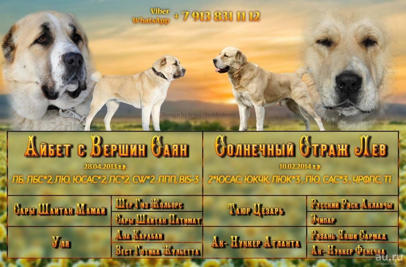 Клички для маламута: традиционные, необычные и интересные имена для собак, и как назвать мальчика и девочку?