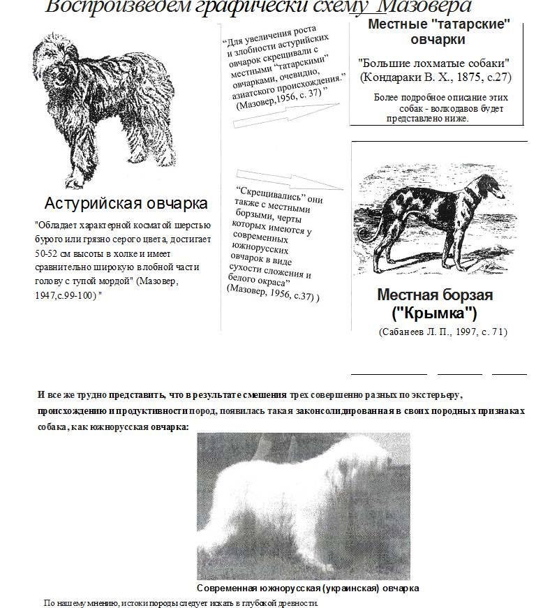Южнорусская овчарка: описание породы, отзывы владельцев, уход и дрессировка собак
