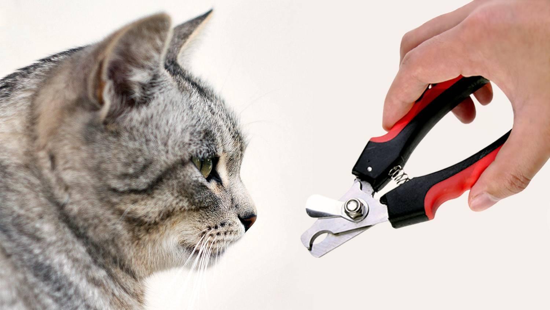 Как подстричь когти кошке: советы и порядок действий