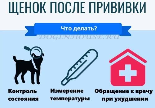 Купание собак - как часто купать, при какой температуре, как приучить собаку к купанию