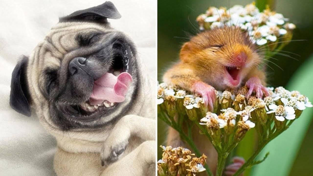 Умеют ли собаки улыбаться и смеяться?