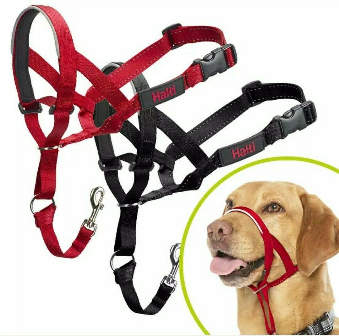Недоуздок, или халти, для собак: предназначение и правила использования, самостоятельное изготовление