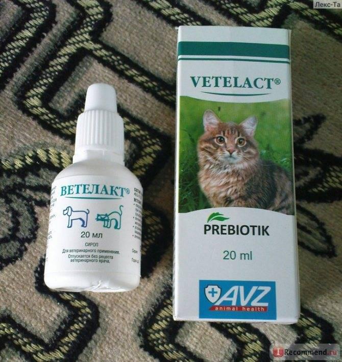 Слабительные средства при запорах для кота