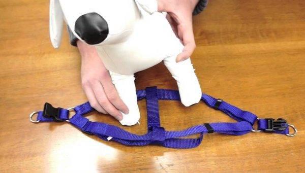 Как сшить шлейку для собаки своими руками