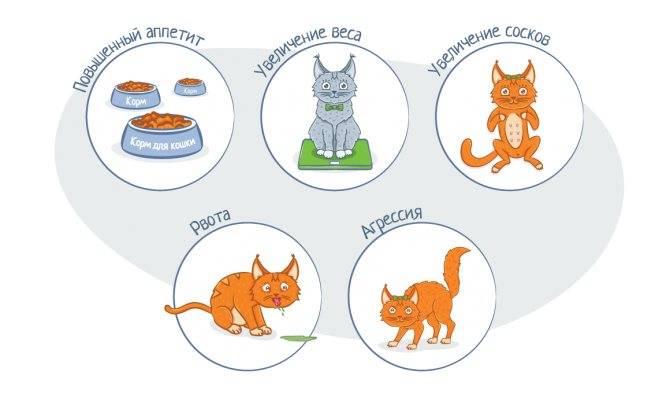Как понять, что кошка рожает: симптомы, поведение, первые роды