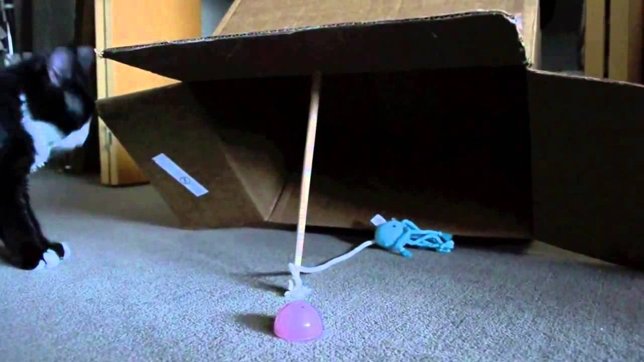 Как приручить дикого котенка и сделать его ласковым