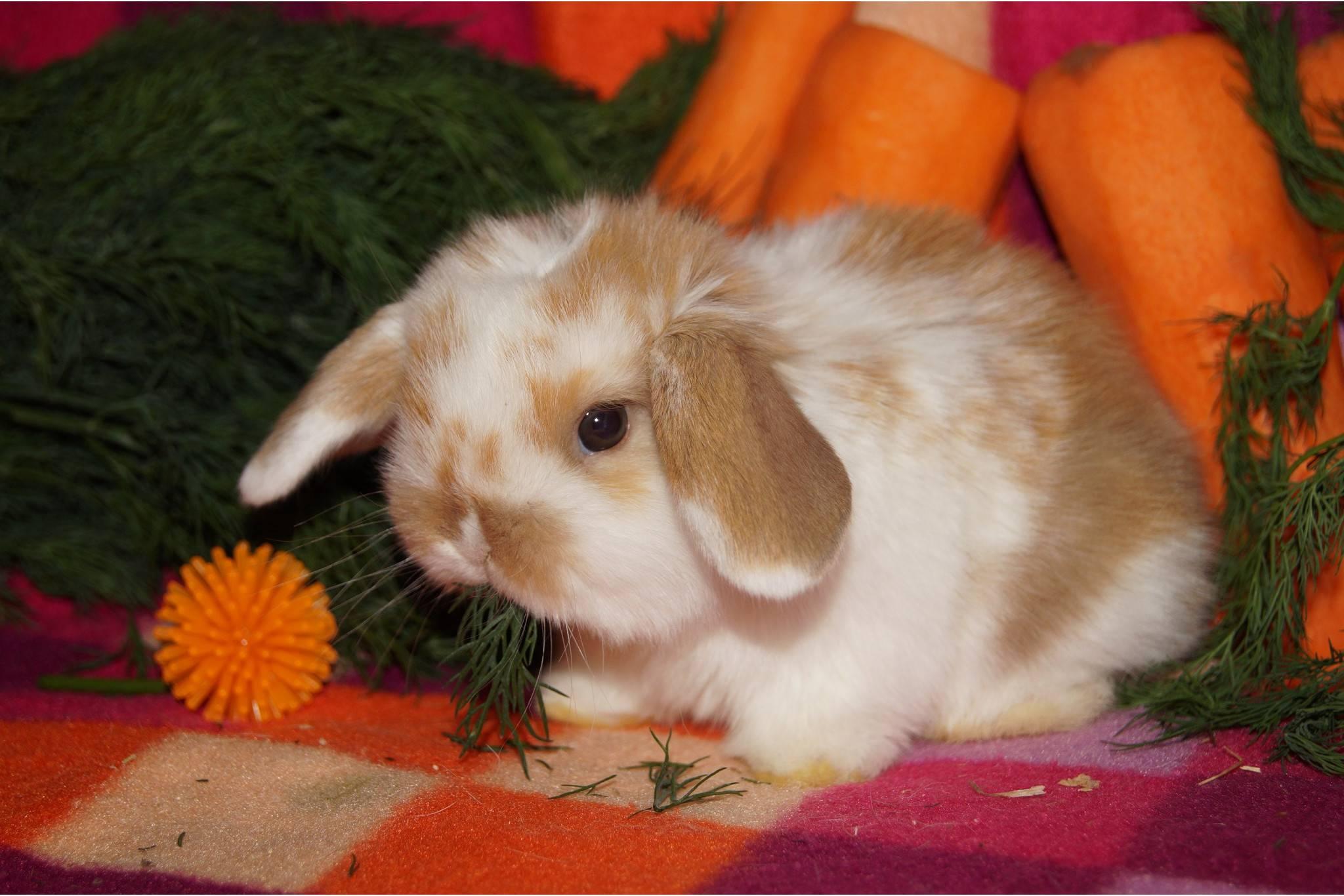 Как назвать кролика девочку и мальчика: 388 имен для самок и самцов по алфавиту и список самых красивых и прикольных кличек