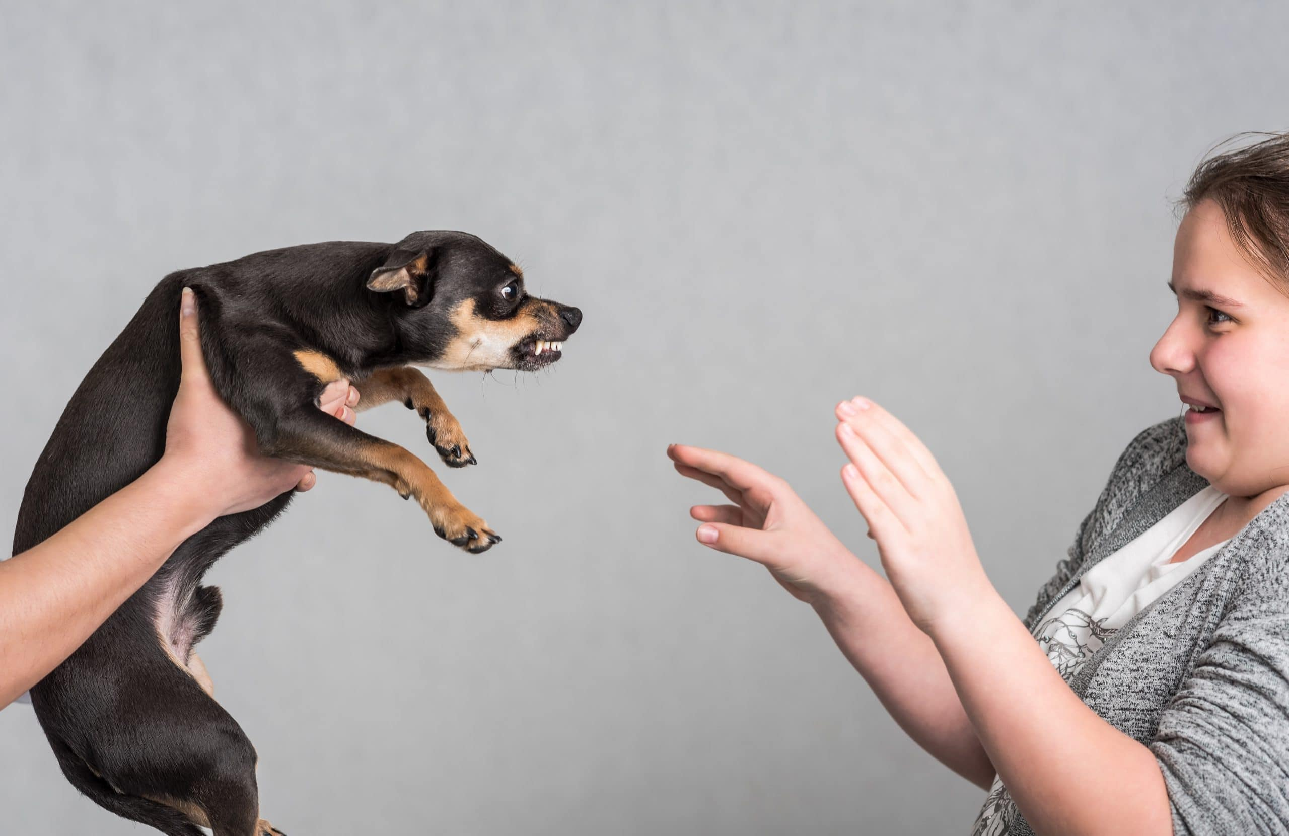 Как перестать бояться собак – рекомендации от кинологов