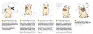Как приручить собаку?