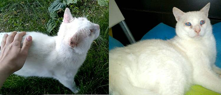О белой кошке замолвите слово…