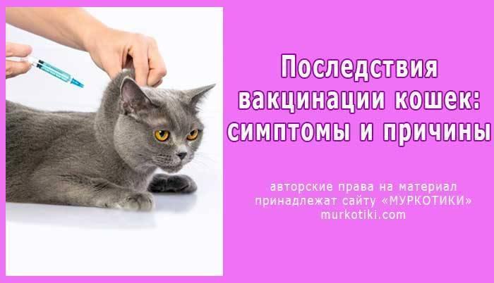 Какие прививки делают котятам и когда делать прививки котятам