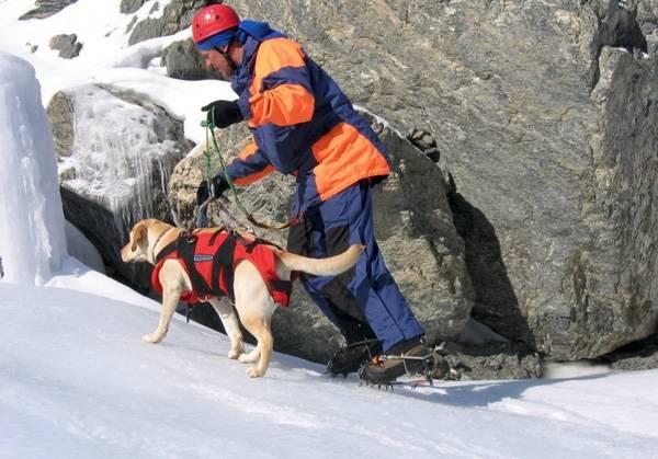 Собаки - спасатели, совсем немного о них