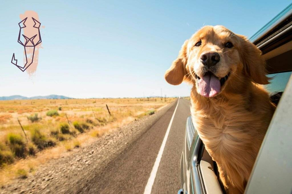 7 послушных пород собак, которых можно брать в путешествие
