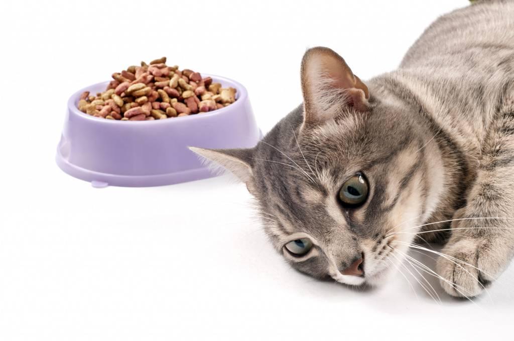 Рвота у котенка: что делать, если малыша рвет или тошнит, как помочь в домашних условиях?
