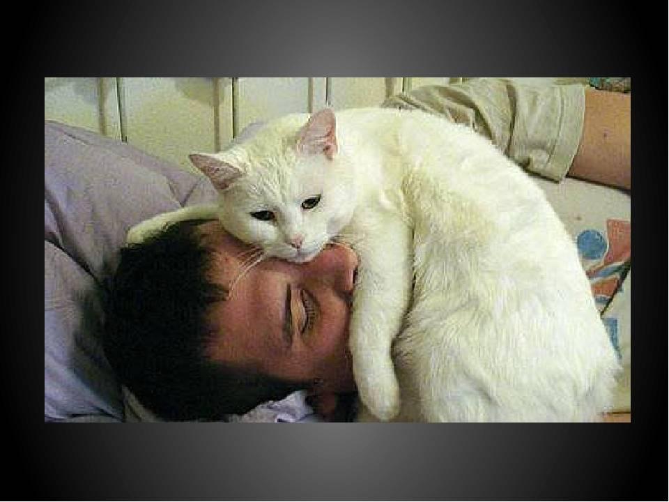Почему нельзя будить кота и чем это чревато