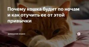 Почему кот орет по ночам: причины неспокойного поведения, что делать