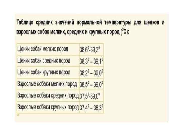 Какая нормальная температура у собак?