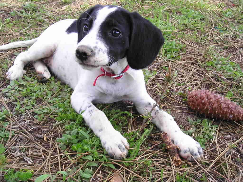 Ошибки в кормлении собаки, которые могут привести к болезням