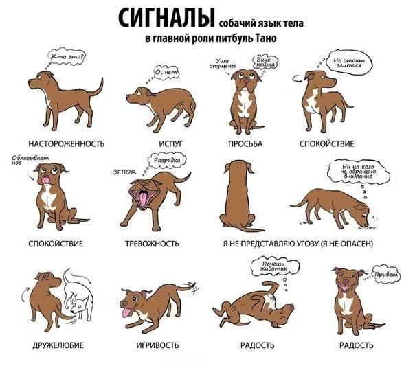 Кошачий язык: как понять своего любимца