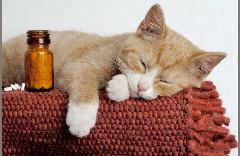 Как подобрать слабительное для котят и кошек