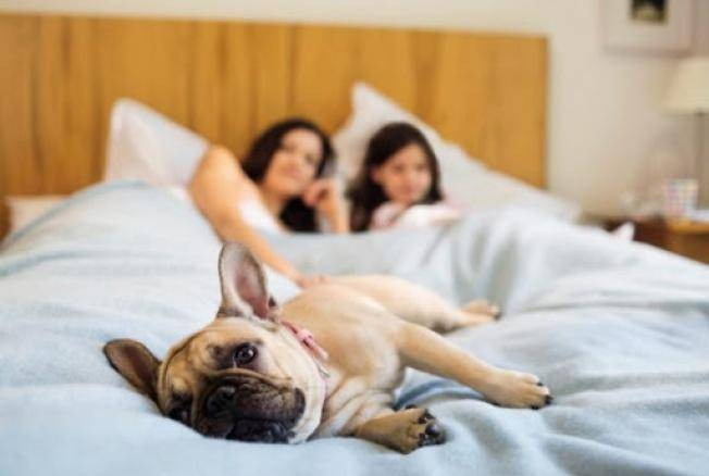 Как отучить кошку гадить на кровать: основные причины и методы влияния