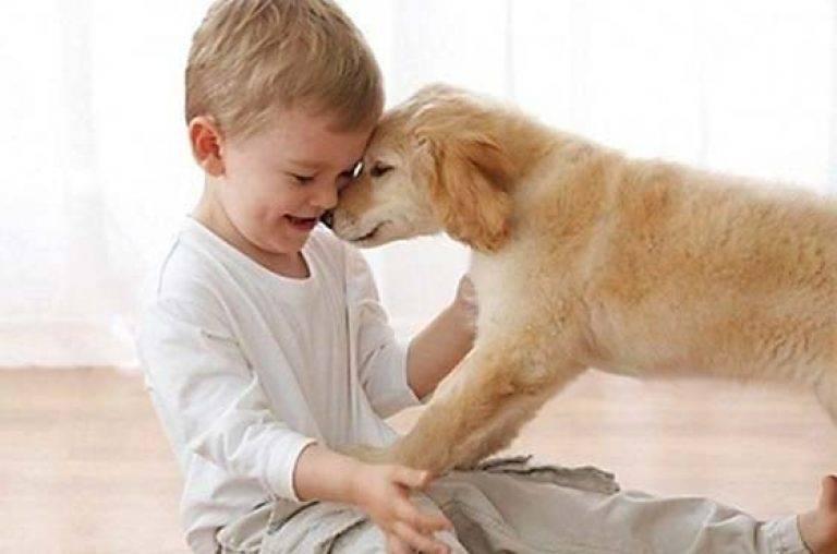 Как перестать бояться собак и избавиться от фобии навсегда