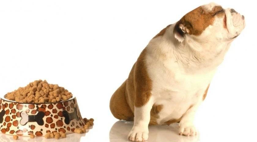 Собака отказывается от еды — ищем и устраняем причину