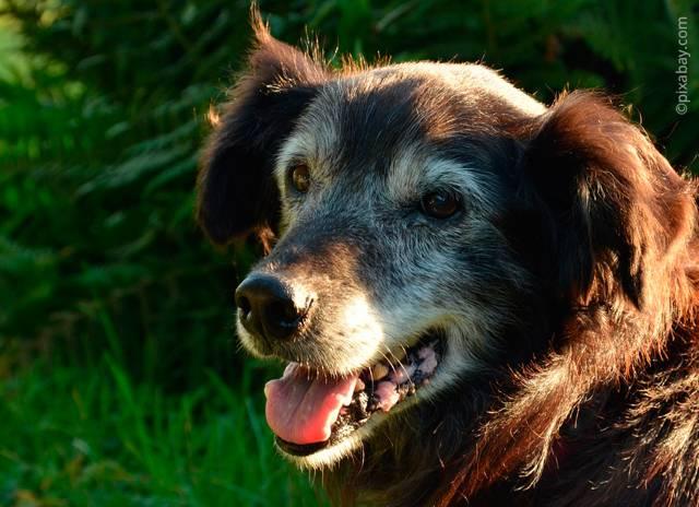 Как можно определить породу собак?