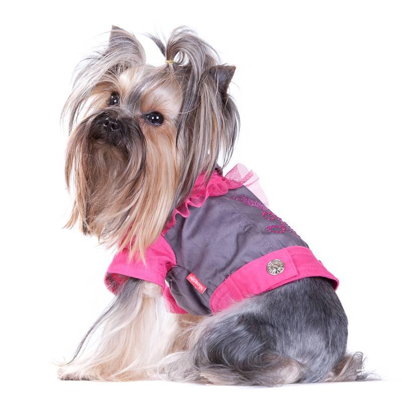Йоркширский терьер: фото как выглядит собака девочка и мальчик на картинке, и где можно смотреть изображения взрослого питомца