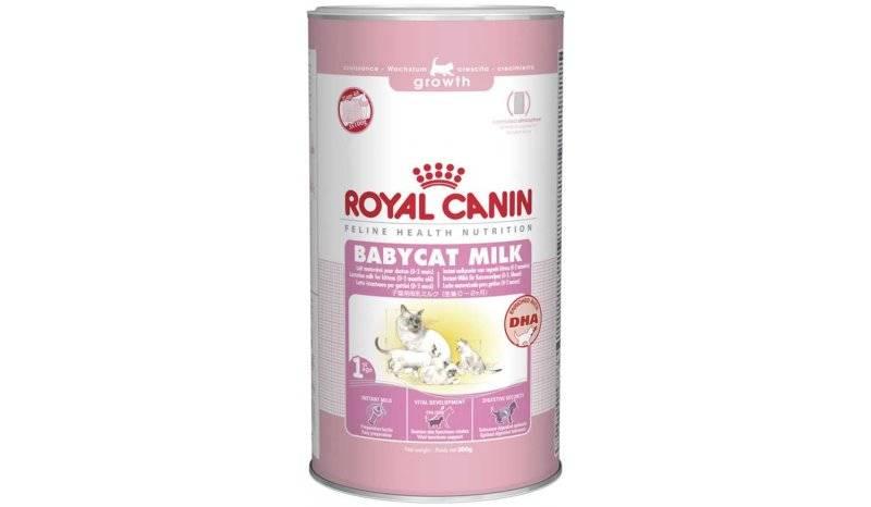 Чем кормить кошку после родов?