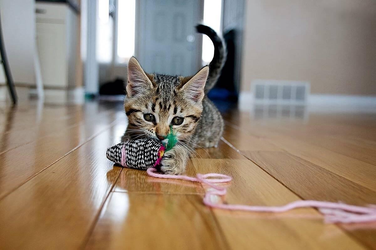 Признаки радости у питомца или как понять, что ваша кошка счастлива - твойпитомец
