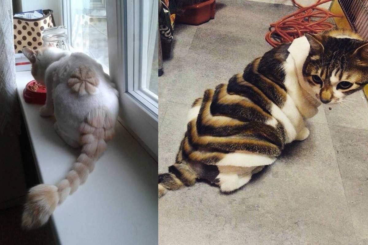 Как подстричь кота или кошку в домашних условиях