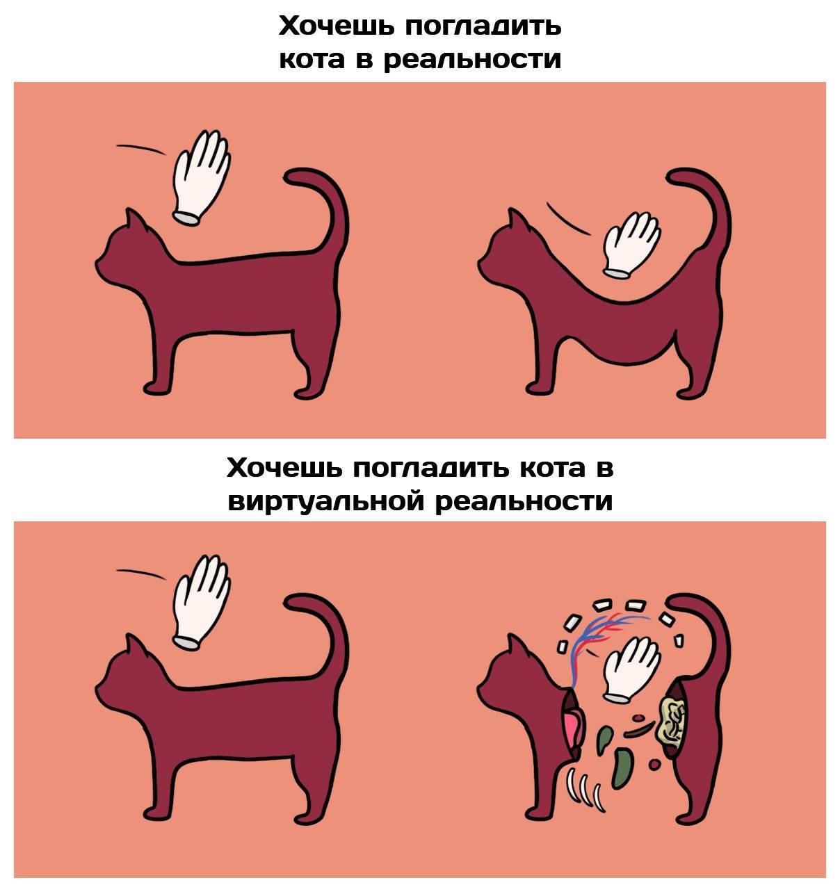 Как правильно гладить кошку: ? где можно и нельзя гладить кота