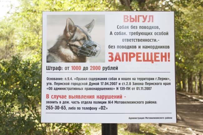 Закон о собаках: содержание, ответственность