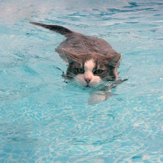 Почему кошки боятся воды? как побороть эту боязнь?