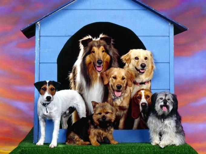 Какую породу собак лучше выбрать для охраны дома