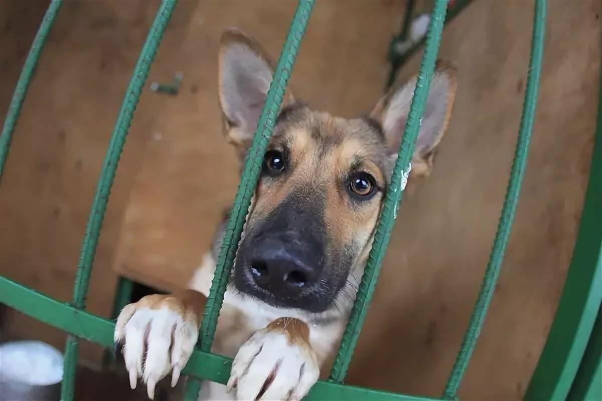 Куда можно пристроить щенков бездомной собаки навсегда: обзор приютов