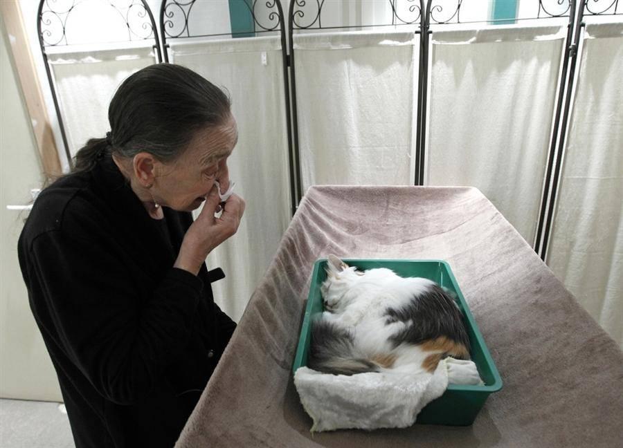 Почему и куда кошки уходят умирать перед смертью