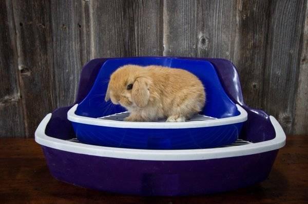 Понос у кроликов: причина, лечение, профилактика