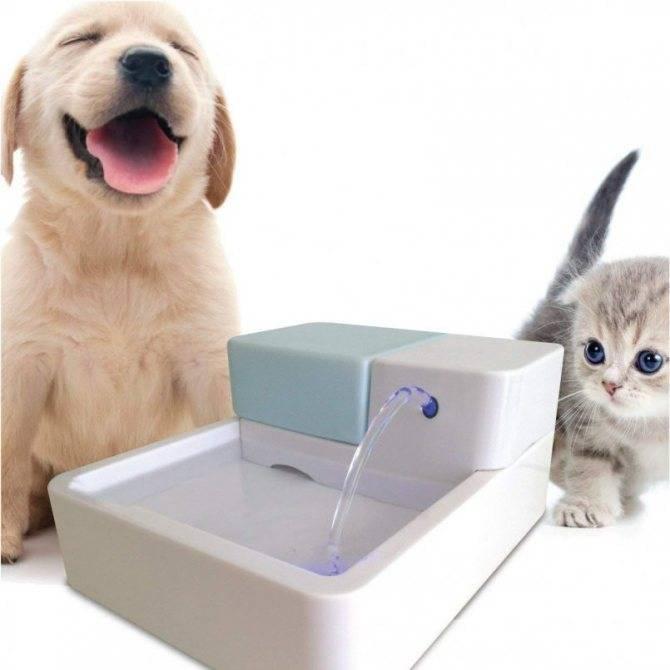 Поилка (фонтан) для кошек: рейтинг лучших 4, как сделать самому
