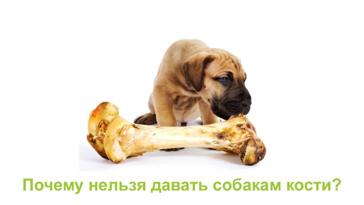 Почему собакам нельзя куриные кости