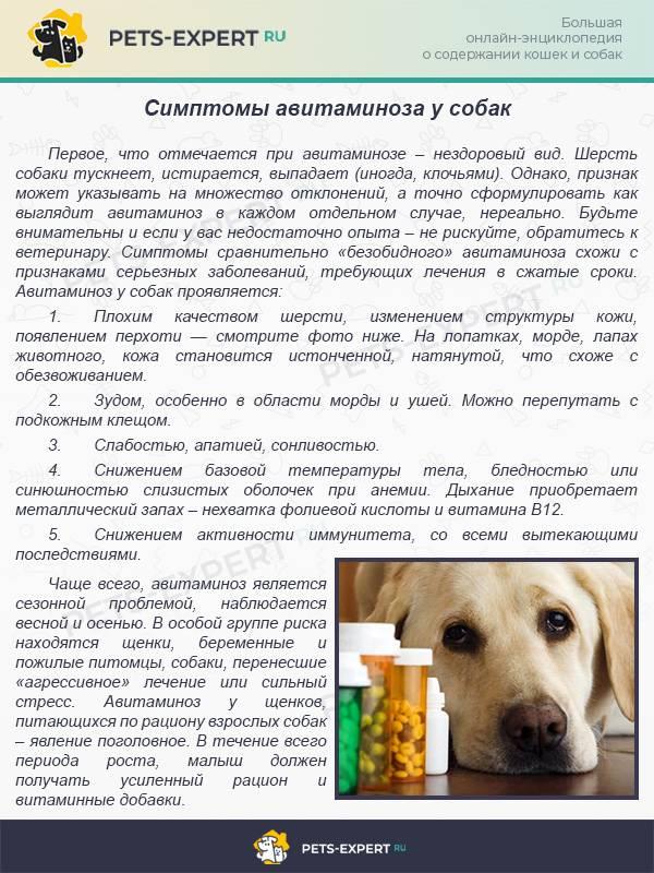 Гепатит у кошки: симптомы и лечения заболевания