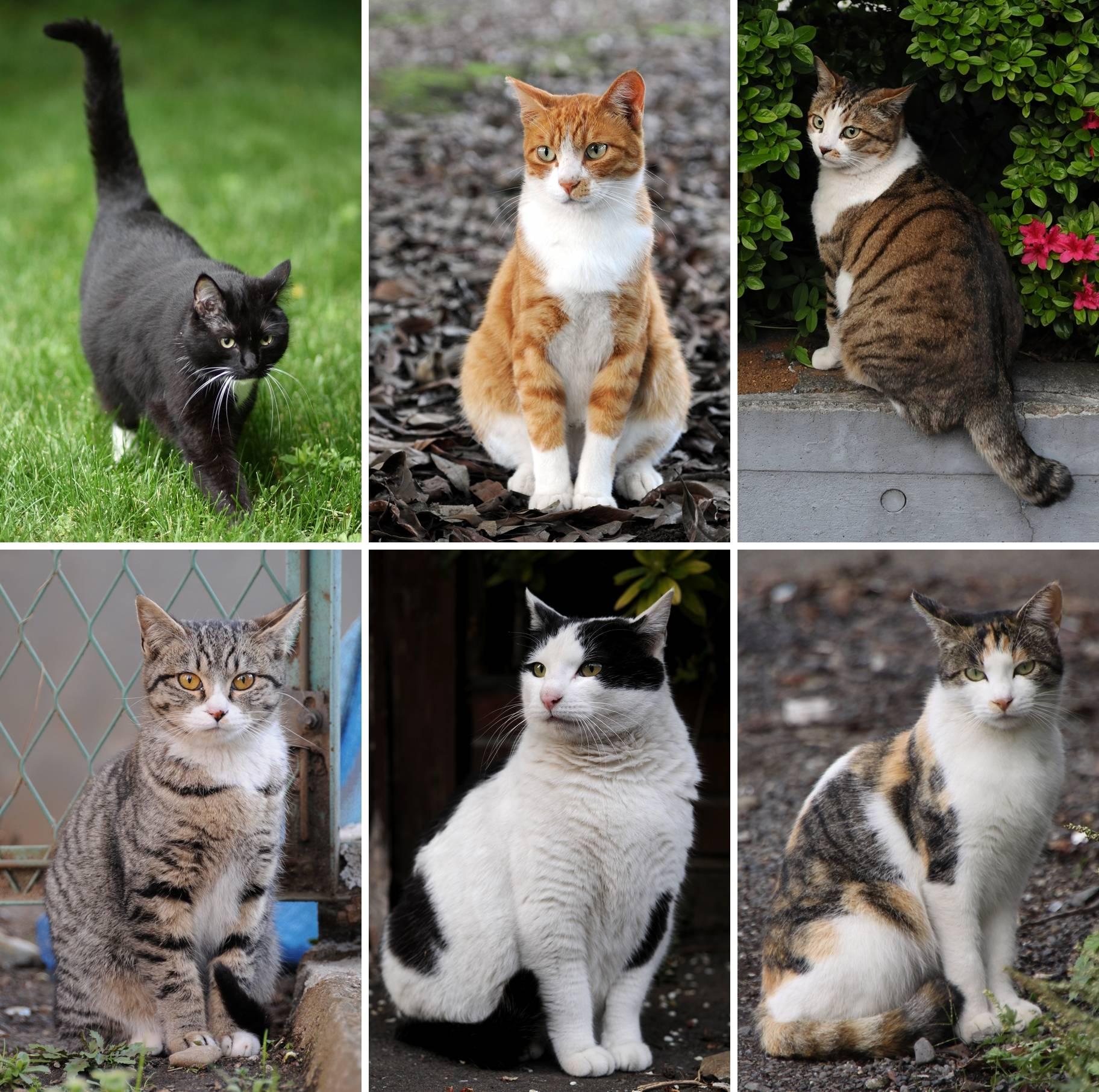 Кошку какой породы лучше выбрать для ребенка в квартиру: фото и названия самых добрых питомцев