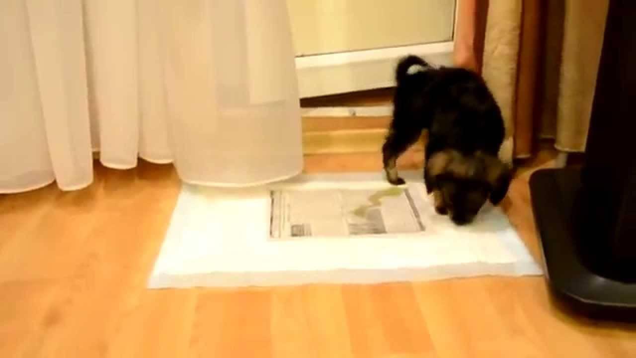 Основные правила и полезные рекомендации, как отучить собаку или щенка писать в доме