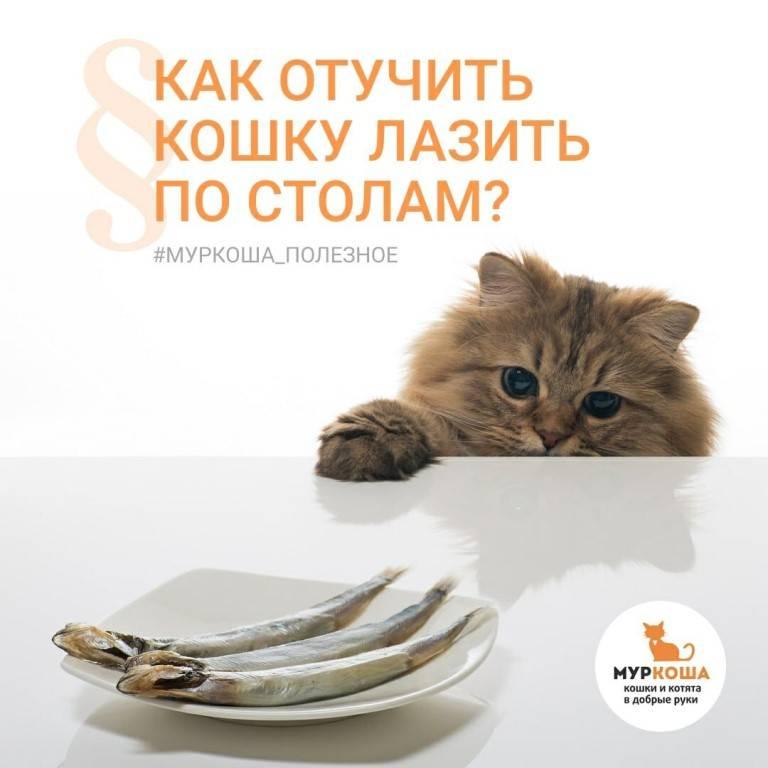 Кошка лазит по столам. как быстро отучить?