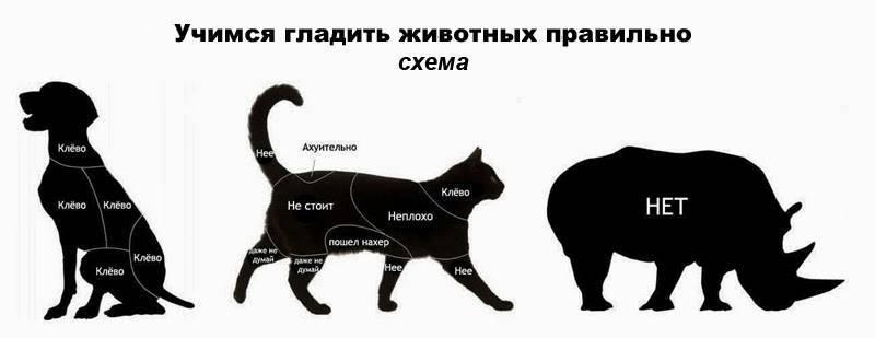 Основные способы приручения кошки к рукам и ласке, варианты с разными породами