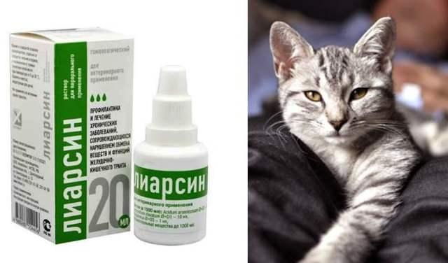 Можно ли колоть человеку лиарсин. лиарсин для кошек: инструкция по применению. i. общие сведения