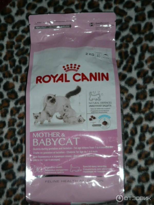 Инструкция по применению и обзор кормов ренал от royal canin для котов
