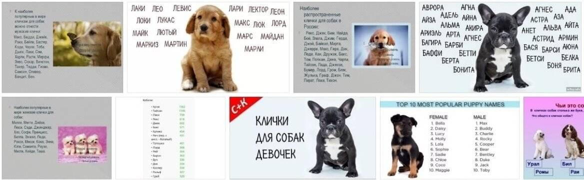 Клички для бойцовских собак, красивые имена для щенков мальчиков и девочек.