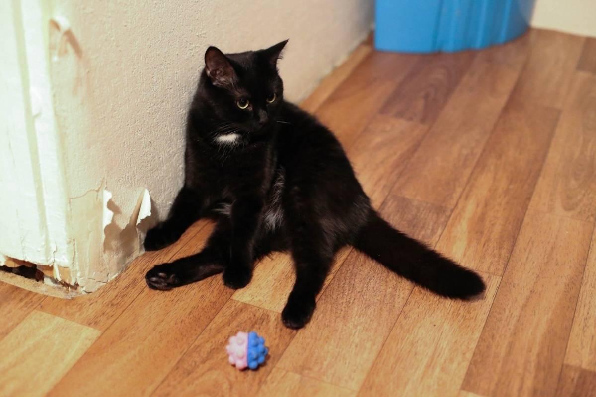 Как отучить кота и кошку драть обои и мебель, особенности отучения котят и взрослых животных, полезные советы и рекомендации, отзывы